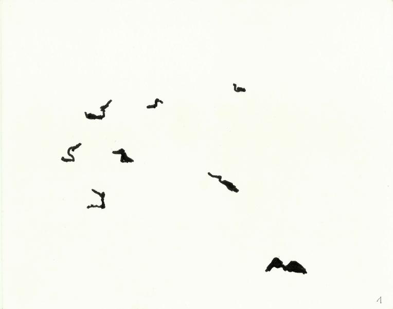 kormorane-01