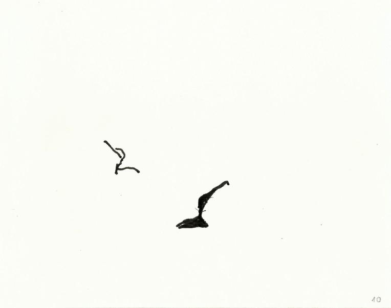 kormorane-010
