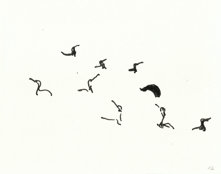 kormorane-012