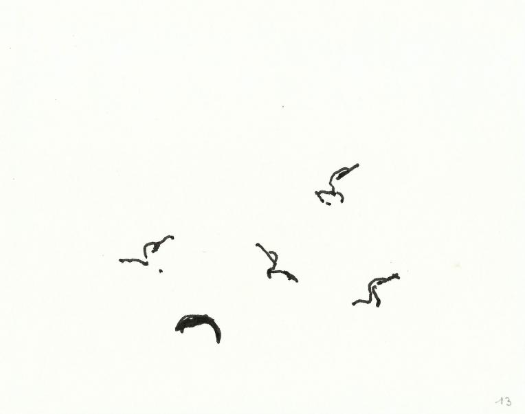 kormorane-013