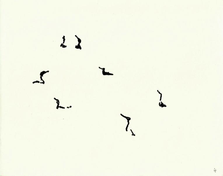 kormorane-04