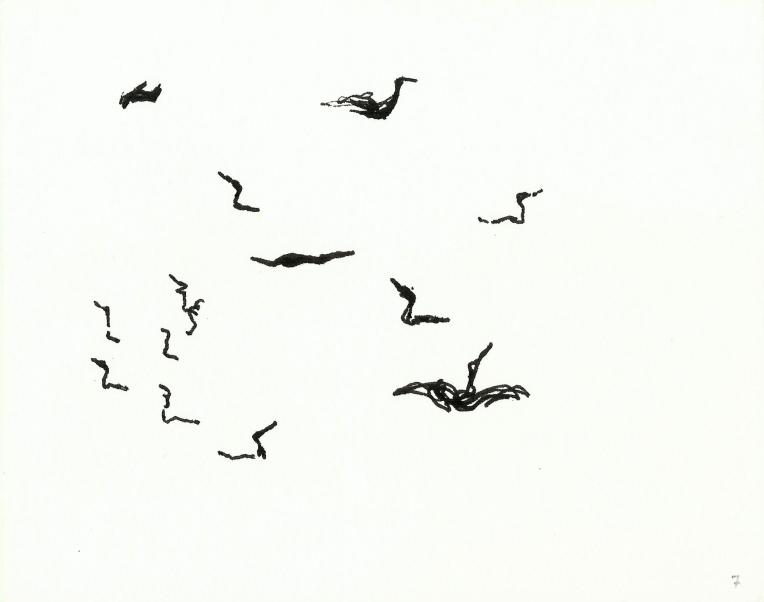 kormorane-07